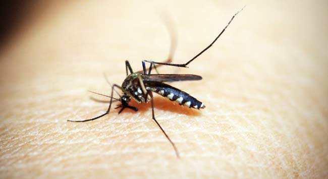 Muggen Uit Je Slaapkamer Krijgen En Houden | WoonGeluck